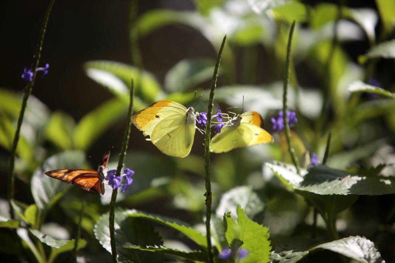 O borboletário é um dos atrativos do Mangal das Garças