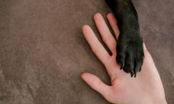 Adotar um animal é gesto de amor e de responsabilidade
