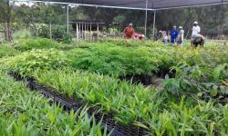 Altamira recebe, neste sábado, 18, a plantação de 20 mil mudas