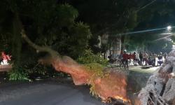 Árvore cai em bairro do centro durante a noite