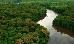 Pará será sede de debate global sobre Bioeconomia