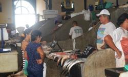 Preço do pescado volta a cair na grande Belém