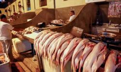 Preço do pescado tem nova queda em Belém