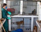 Zoonoses oferece serviços gratuitos de castração e vacinação de animais