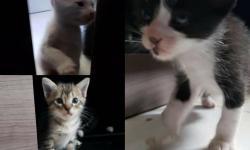 Três gatinhos estão para adoção em Belém