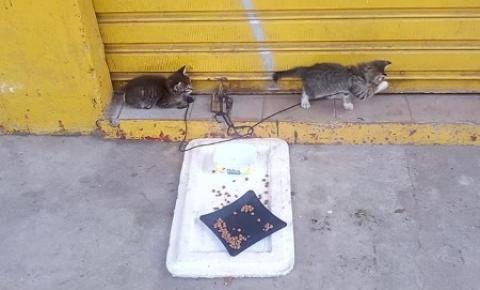 Me adote ou me alimente: gatos à procura de um lar