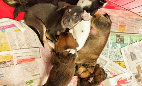 Shopping de Belém recebe Feira de Adoção de Pets neste sábado