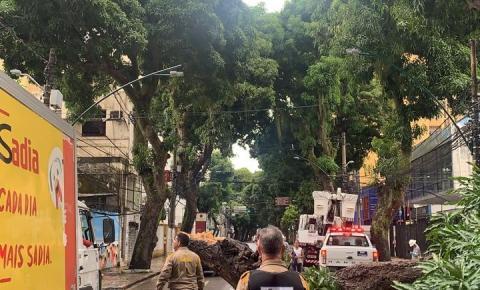 Árvore cai na Av. Nazaré