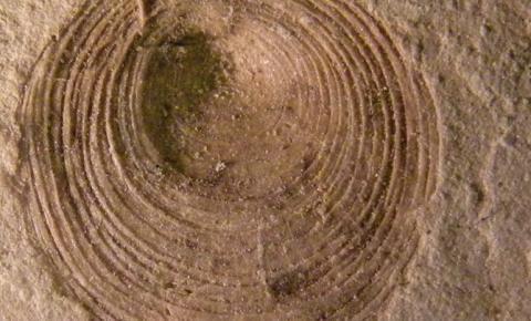 Pesquisa revela mar na Bacia do Amazonas há milhões de anos