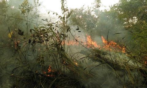 """The Nature Conservancy estreia """"Floresta sem Fogo"""" neste sábado"""