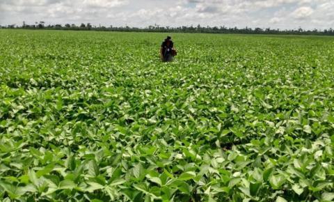 Vazio sanitário da soja protege colheita contra ataques de fungo