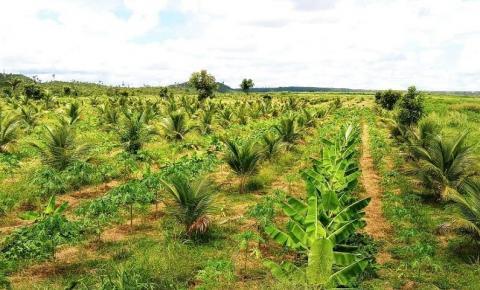 Zona rural de Ulianópolis alia inovação agrícola com preservação ambiental