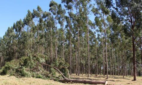 Evento debate agenda positiva para o manejo florestal na região