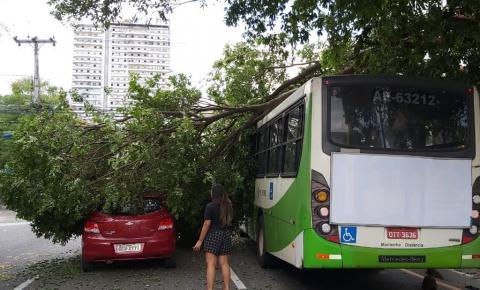 Galho de árvore cai na rua Gama Abreu e deixa trânsito lento