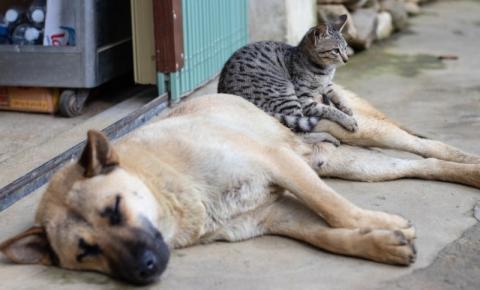Saiba como amenizar stress de cães e gatos nas festas de fim de ano