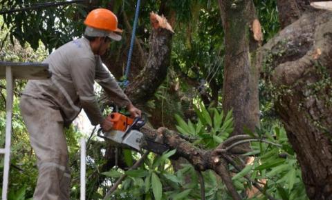 SeMOB  realiza ação emergencial de poda de árvores na capital