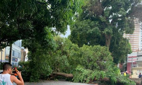 Queda de árvore na Av. Generalíssimo Deodoro